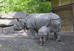 The Indian rhinoceros pictured here is the species most closely related to the Javan rhinoceros; they are the two members of the type genus Rhinoceros.