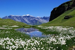 An alpine mire in the Swiss Alps
