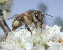 Pollinating insects are co-adapted with flowering plants.