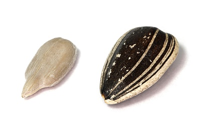 Seed dehulled (left) and with hull (right)