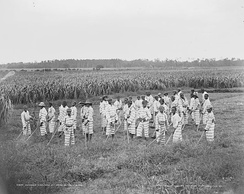 Juvenile African-American convicts working in the fields in a chain gang, photo taken c. 1903