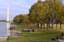 Rows of American elm trees south of the Lincoln Memorial Reflecting Pool (November 11, 2006)