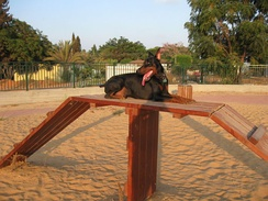 A Doberman Pinscher in a dog park in Hod Hasharon, Israel