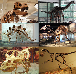 Skeleton of various extinct dinosaurs; some other dinosaur lineages still flourish in the form of birds