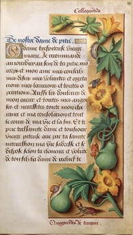 Early 1500s painting of squash plants and fruits