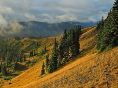 Hurricane Ridge supports dry subalpine and alpine conditions in the Olympics