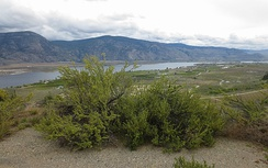 View looking east over the southern Okanagan Valley on a spring afternoon
