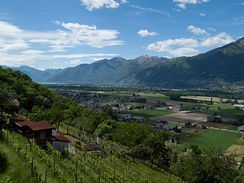 Vineyards above Locarno