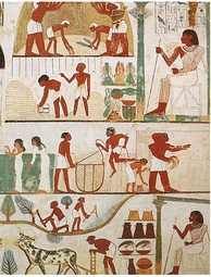 Agricultural scenes of threshing, a grain store, harvesting with sickles, digging, tree-cutting and ploughing from ancient Egypt. Tomb of Nakht, 15th century BC