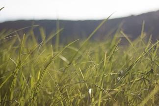 Трава летом