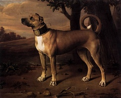 "A ""chamber dog"" with a gilded collar, Brandenburg (Germany), 1705"