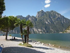 Palms and maritime pines on the shores of Lake Garda