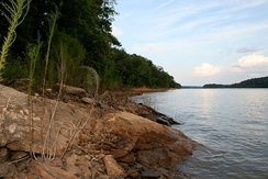 Bank of the Tugaloo River at Lake Hartwell near the Tugaloo State Park campground