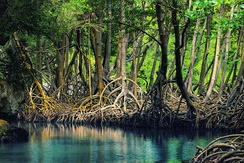 Mangroves in Los Haitises National Park