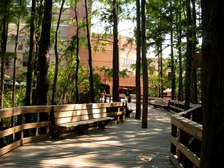 The boardwalk behind the UCF Student Union