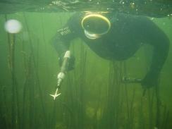 Метод активного поиска в пресных водоёмах Прибалтики c пневматическим ружьём