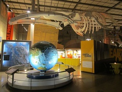 Whale skeleton above large raised relief globe
