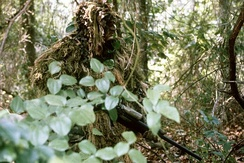 A US Marine sniper wearing a ghillie suit.