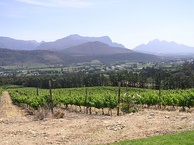 Vineyard in the Paarl ward of Franschhoek (Western Cape Province). The South African wine industry (New World wine) is among the lasting legacy of the VOC era.