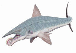 Helicoprion bessonowi