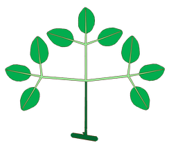 Structure of a biternate compound leaf