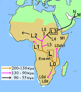 Map of early diversification of modern humans, with haplogroup L2 entering West Africa.