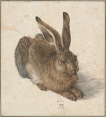Young Hare, (1502), Watercolour and bodycolour (Albertina, Vienna)