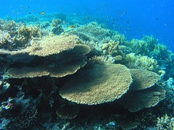Red sea coral reefs.
