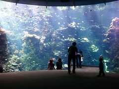 Philippine coral reef tank