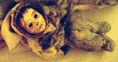 The mummy of a six-month-old boy found in Qilakitsoq