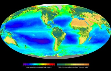 A false-color composite of global oceanic and terrestrial photoautotroph abundance, from September 2001 to August 2017. Provided by the SeaWiFS  Project, NASA/Goddard Space Flight Center and ORBIMAGE.[citation needed]