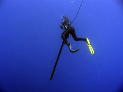 Выжидание выхода рыбы на нырке в толще воды с арбалетом, оснащённым несколькими латексными тяжами для повышения дальности полёта гарпуна