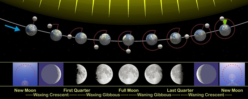 The phases of the Moon as viewed looking southward from the Northern Hemisphere. Each phase would be rotated 180° if seen looking northward from the Southern Hemisphere. The upper part of the diagram is not to scale, as the Moon is much farther from Earth than shown here.