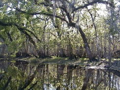 St. Johns River in Blue Spring State Park.