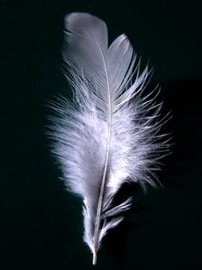A white feather is sometimes given as a mark of cowardice.