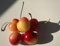 Rainier cherries from the state of Washington, USA