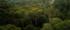Amazon Rainforest in South America