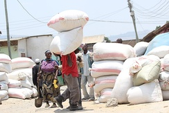 A man helping transport bags of rice manually outdoors during the day time.