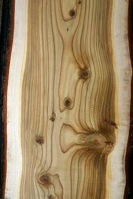 Wood of Cedrus deodara.