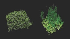 Lidar imaging comparing old-growth forest (right) to a new plantation of trees (left)