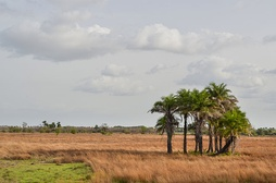 Typical scenery in Guinea-Bissau