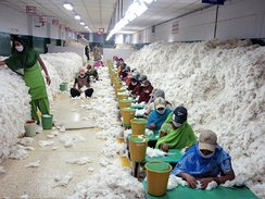 Manually decontaminating cotton before processing at an Indian spinning mill (2010)