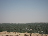 Al-Hasa is famous for its palm trees and dates. Al-Hasa has over 30 million palm trees which produce over 100 thousand tons of dates every year