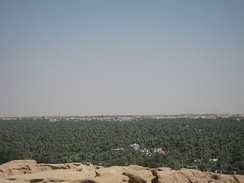 Al-Hasa is known for its palm trees and dates. Al-Hasa has over 30 million palm trees which produce over 100 thousand tons of dates every year.