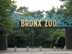 The Bronx Zoo is the largest zoo in New York City, and among the largest in the country.
