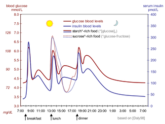 The fluctuation of blood sugar (red) and the sugar-lowering hormone insulin (blue) in humans during the course of a day with three meals. One of the effects of a sugar-rich vs a starch-rich meal is highlighted.