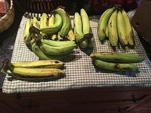 Approximately 30 Gros Michel Bananas.jpg