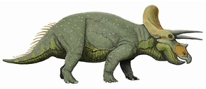 Recreación de un Triceratops horridus.