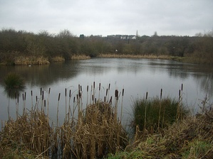Carr Forge Dam is a haven for animals and plants. The houses of Woodhouse are in the background.