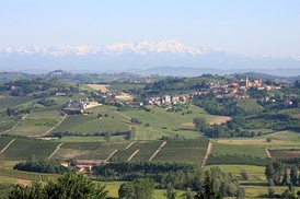 A Montferrat landscape, with the distant Alps in the background.